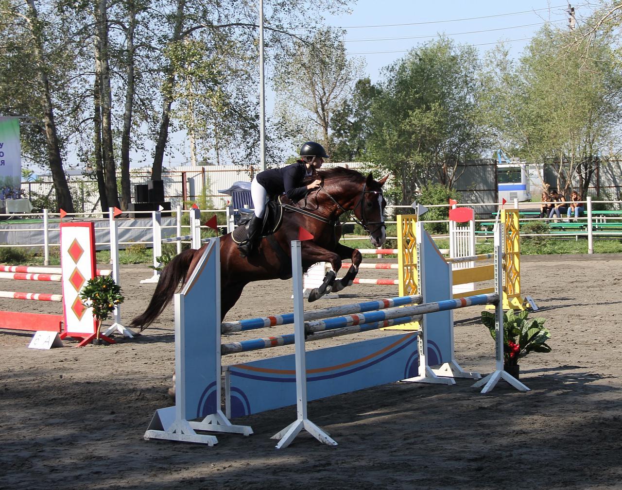 В Динском районе состоялся Кубок Краснодарского края по конному спорту